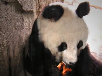 Bao Bao  – Der Panda aus Berlin